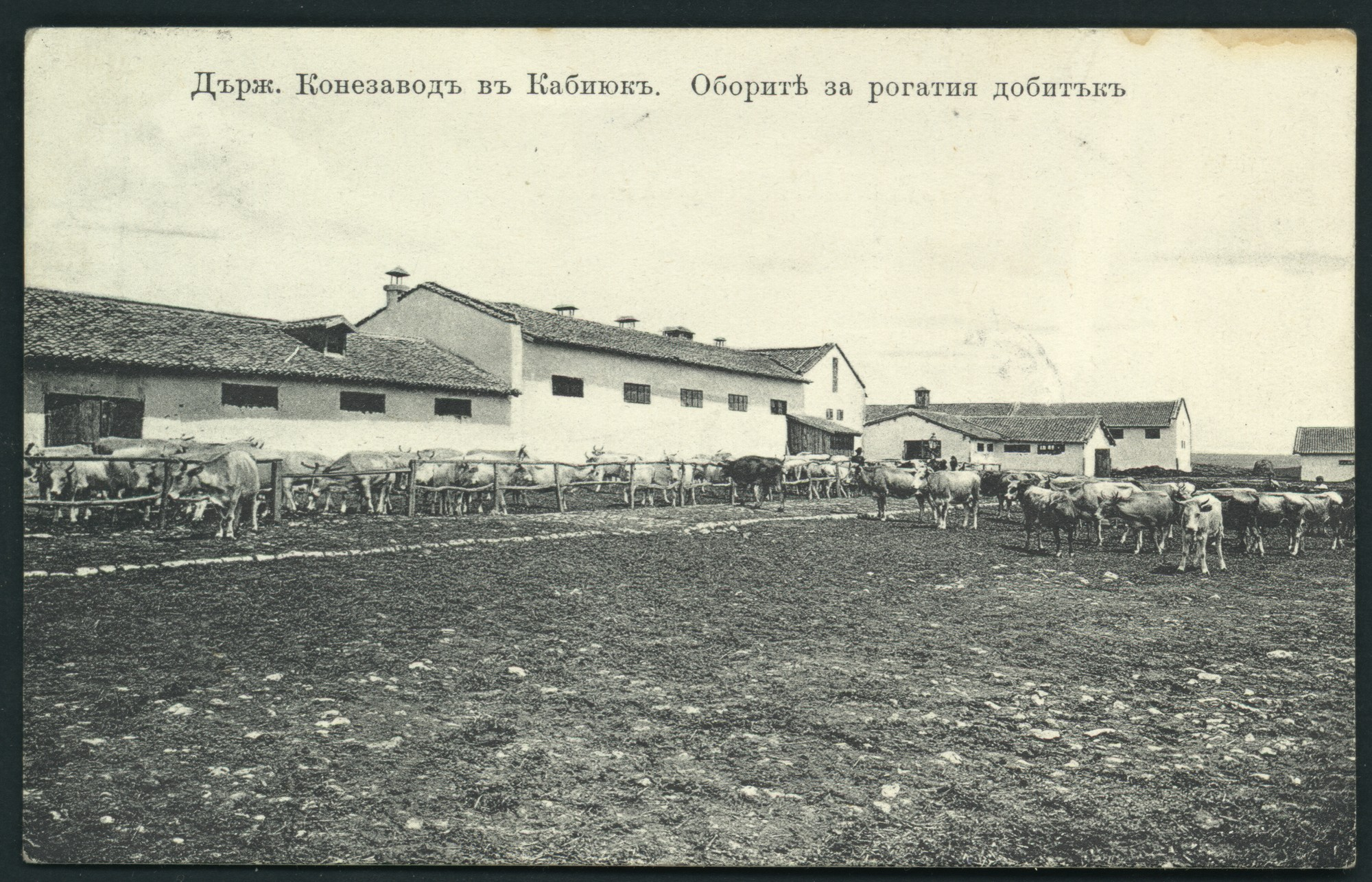 """State Horse Stud in Kabiyuk. The horned cattle stable"", © St. Cyril and St. Methodius National Library"
