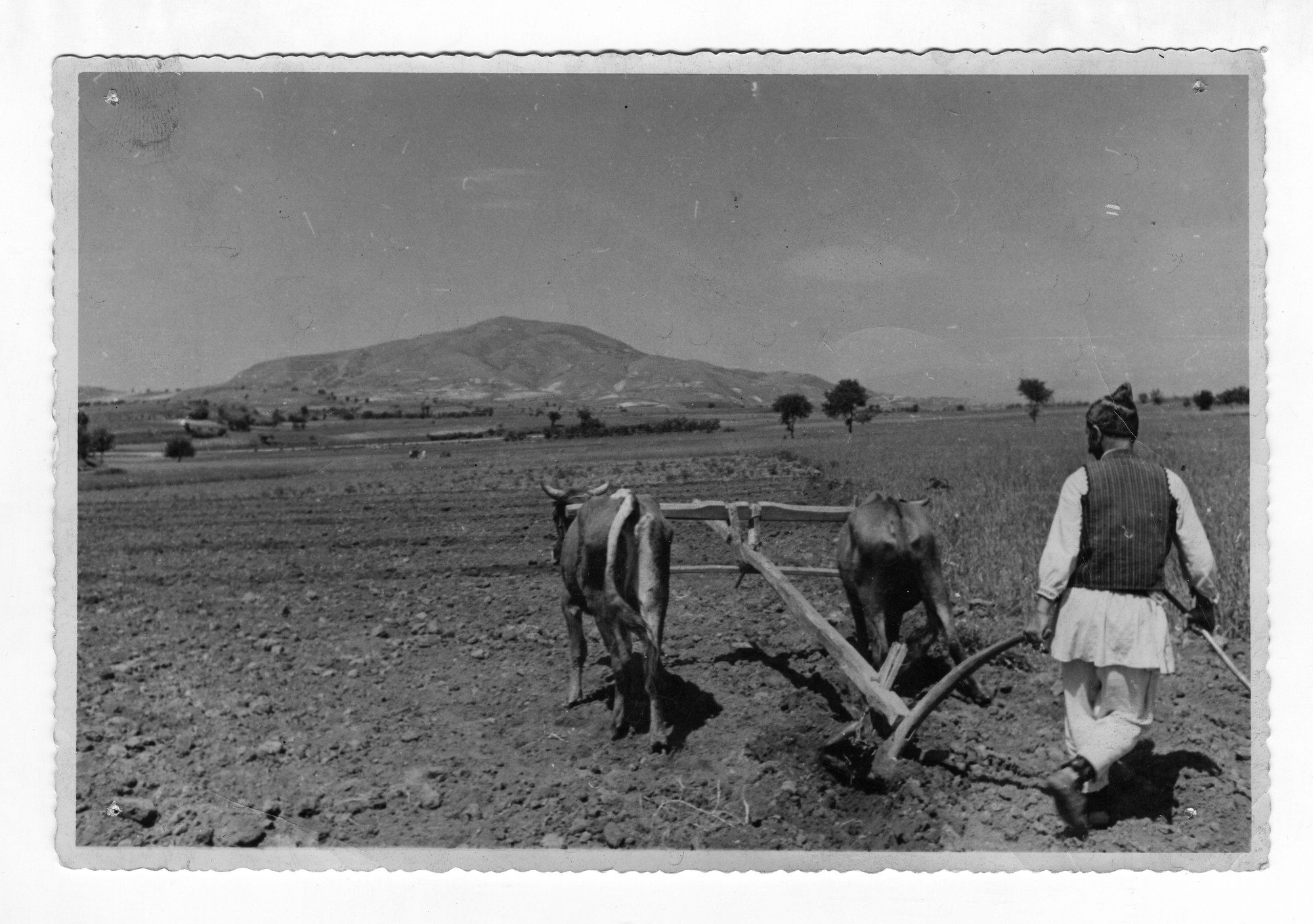 Ploughing, © Institute for Ethnology and Folklore Studies with Ethnographic Museum - AEIM, BAS
