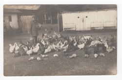 [Untitled] Soldier feeting chickens and gooses