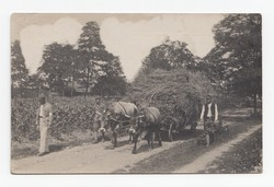 [Untitled] Picture showing men and soldiers with cow-drawn carriage with hay.